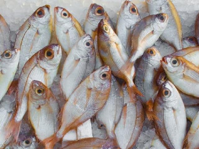 Många små fiskar